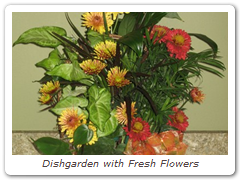 Dishgarden with Fresh Flowers